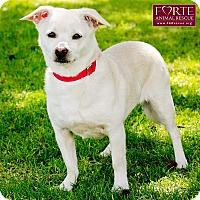 Adopt A Pet :: Blanca - Marina del Rey, CA