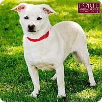 Chihuahua/Pug Mix Dog for adoption in Marina del Rey, California - Blanca