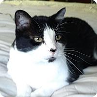 Adopt A Pet :: Big Guy - Des Moines, IA