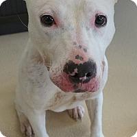 Adopt A Pet :: Betsie - Wauwatosa, WI