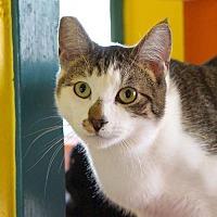 Adopt A Pet :: Ben - Alameda, CA