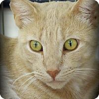 Adopt A Pet :: Stevie - Anaheim Hills, CA