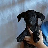 Adopt A Pet :: Zabon - Oviedo, FL