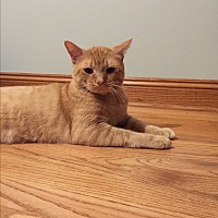 Adopt A Pet :: Rocky - West Dundee, IL