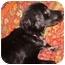 Photo 2 - Border Collie Mix Dog for adoption in Sheboygan, Wisconsin - Sasha