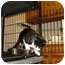 Photo 2 - Domestic Shorthair Cat for adoption in Baton Rouge, Louisiana - Judy