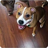 Adopt A Pet :: Mina - Indianapolis, IN