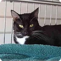 Adopt A Pet :: Billy - Modesto, CA