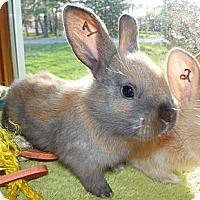 Adopt A Pet :: Basil - North Gower, ON