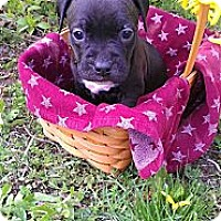 Adopt A Pet :: Female # 3 - Roaring Spring, PA