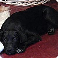 Adopt A Pet :: Mercedes - Silsbee, TX