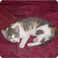 Adopt A Pet :: Madison - Quincy, MA