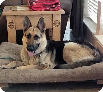 German Shepherd Dog Dog for adoption in Houston, Texas - Margie