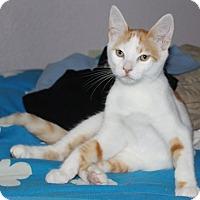 Adopt A Pet :: KelsoE - North Highlands, CA
