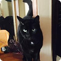 Adopt A Pet :: Nikki - Kelso/Longview, WA