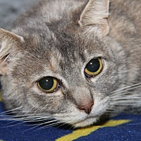 Adopt A Pet :: Sulkie (Spayed) - Marietta, OH