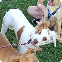 Adopt A Pet :: Morgan - Las Cruces, NM
