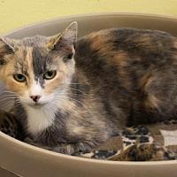 Adopt A Pet :: Debbie Pampa - Denver, CO