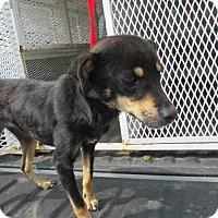 Adopt A Pet :: June - Newnan City, GA
