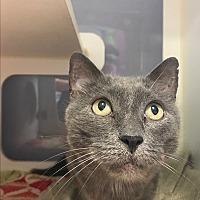 Adopt A Pet :: Grayson - Meridian, ID