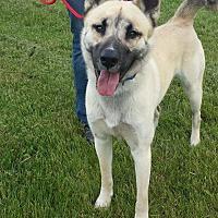 Adopt A Pet :: Maveric - Lake Odessa, MI