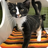 Adopt A Pet :: sofie - millville, NJ