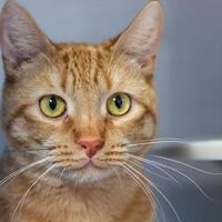Adopt A Pet :: Buddy - Bryan, TX