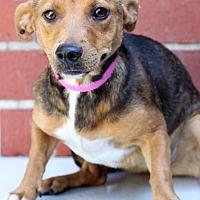 Adopt A Pet :: June Bug - Waldorf, MD
