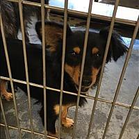 Adopt A Pet :: Midnight - Encino, CA