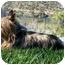 Photo 3 - Silky Terrier Dog for adoption in El Cajon, California - Silky Terrier