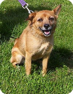 Terrier (Unknown Type, Small) Mix Dog for adoption in Somerset, Pennsylvania - Katy