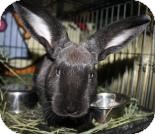 New Zealand Mix for adoption in West Des Moines, Iowa - Frankie