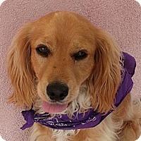 Adopt A Pet :: THEODORE - Toluca Lake, CA