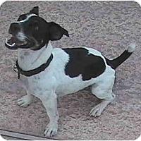 Adopt A Pet :: ARNIE - Phoenix, AZ