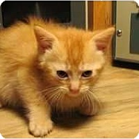 Adopt A Pet :: Wuzzy - Warren, MI