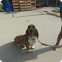 Adopt A Pet :: Ruby - Cincinnati, OH
