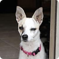 Adopt A Pet :: Kiowa - Austin, TX