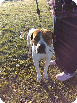 Black Mouth Cur Mix Dog for adoption in Cincinnati, Ohio - Beau