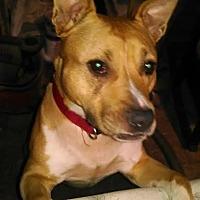 Adopt A Pet :: Chloe - Groton, CT