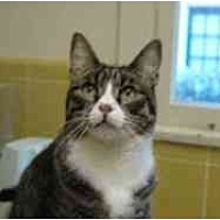 Adopt A Pet :: Etienne - Pasadena, CA