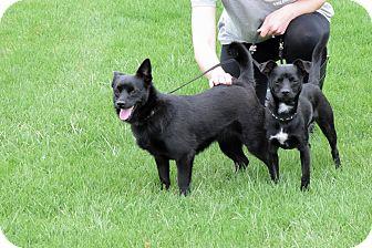 Mixed Breed (Small) Mix Dog for adoption in Meridian, Idaho - Loki