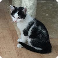 Adopt A Pet :: Ping - Yorba Linda, CA