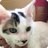 Adopt A Pet :: Sam - Chula Vista, CA