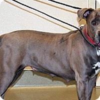 Adopt A Pet :: 352801 LF - Wildomar, CA