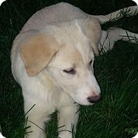 Adopt A Pet :: Christmas - Denver, CO