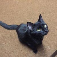 Adopt A Pet :: Gil - Salem, OH
