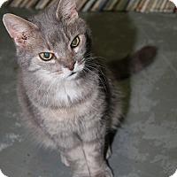 Adopt A Pet :: Heather Rose (Update) - Marietta, OH