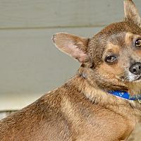 Adopt A Pet :: Peanut - Frisco, TX