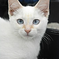 Adopt A Pet :: Jute - Eureka, CA