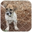 Photo 4 - Boxer/Dachshund Mix Puppy for adoption in Prince William County, Virginia - ruby